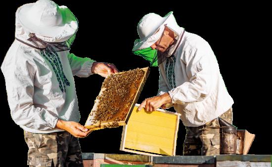 apilcutores aprender del mundo de las abejas team building barcelona